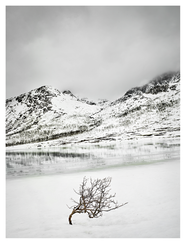 Reflection-Tree