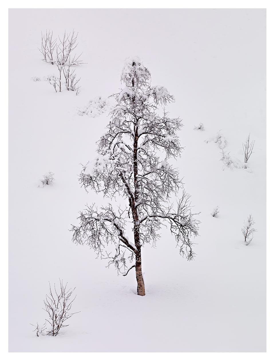 Snowy-Tree